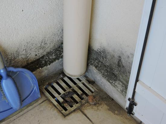Residence La Palmeraie : L'évacuation de la terrasse bouchée