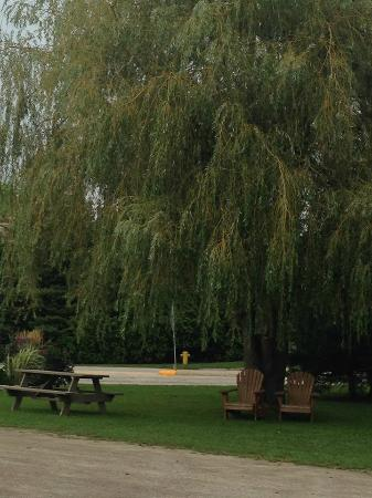 Manitowaning, Canadá: Willow tree in front of Inn