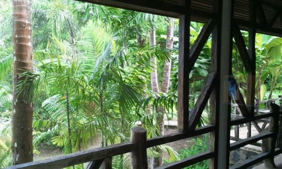 Chai Chet Resort: вид из окна