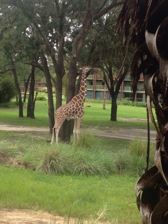 Disney's Animal Kingdom Lodge: photo3.jpg