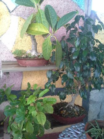 Hostal Bonsai: I bonsai
