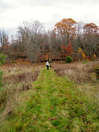 McKellar, Canadá: Walking the Balsam Trail