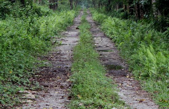 Alipurduar District, Índia: Road to the Jungle