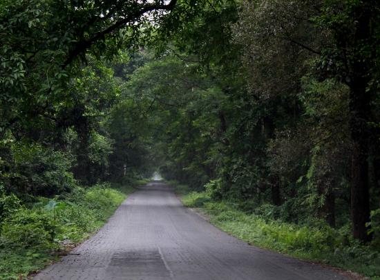 Alipurduar District, Índia: Road through the Jungle