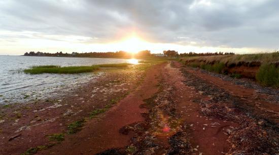 Clark's Sunny Isle Motel: sunset at Clark's Sunny Isle shoreline area
