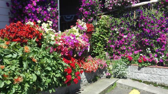 The flowers at Tradewinds Motel in Rockaway Beach - wonderful!