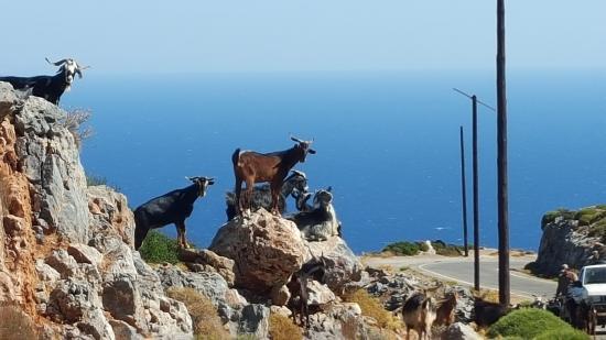 Kastania, اليونان: company on the way!