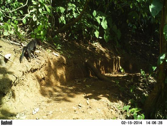 Saladero Eco Lodge: Jaguarundi Trail #3