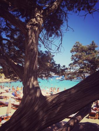 Bilde fra Cala Bassa Beach Club