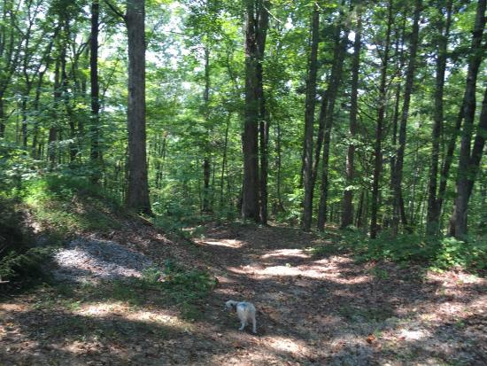 Deep Valley Campground: Hiking trail connected to campground