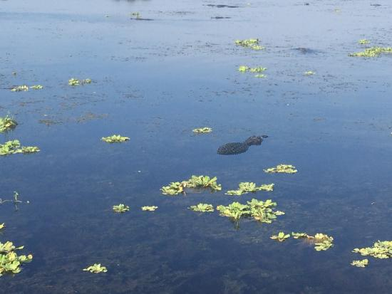 Photo3 Jpg Picture Of Florida Cracker Airboat Rides Vero