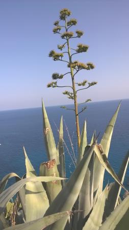 Gambar B&B Isola di Ponza
