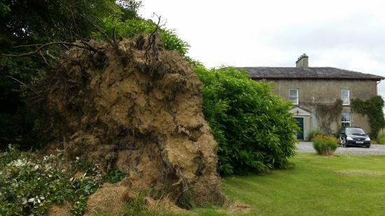 Bayly Farm: Upturned turned from a couple of years ago - strong winds!