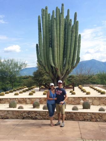 jardines de mexico jardn de los cactus