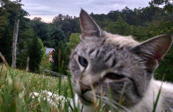 """Candler, NC: My new friend Tucker, the """"mountain cat."""""""