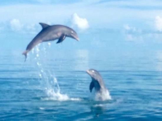 DolphinsintheWild: Bimini's Best