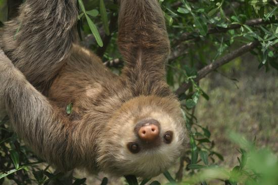 Rancho Santana: Sloth Reserve Tour-we saw lots of wildlife!