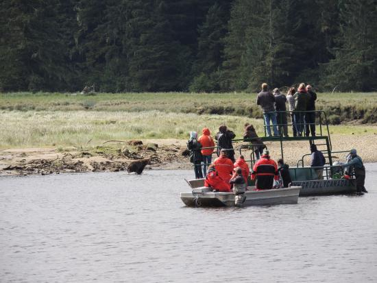 Tide Rip Grizzly Tours: Gotta get that fish!