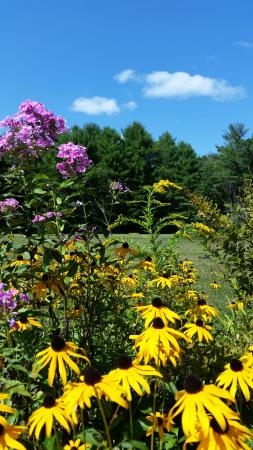Harrison, ME: I love flowers and blue Maine skies!!!!  GMI grounds