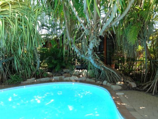 Pool With Pandanus Trees Picture Of Palms City Resort Darwin Tripadvisor