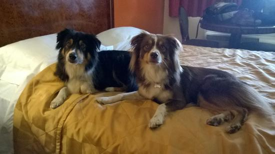 Motel 6 Claremont: The dogs enjoyed the room too