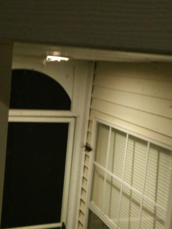 Suites at Fall Creek : Spiders everywhere - I don't think exterior has been cleaned in months