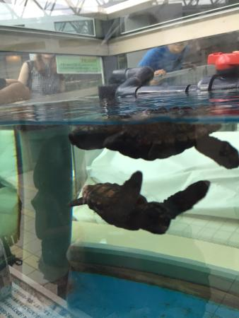 ... jpg - Picture of Port of Nagoya Public Aquarium, Nagoya - TripAdvisor