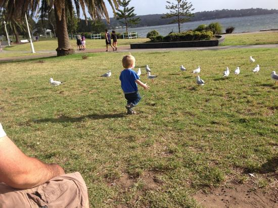 Speers Point, Австралия: photo0.jpg