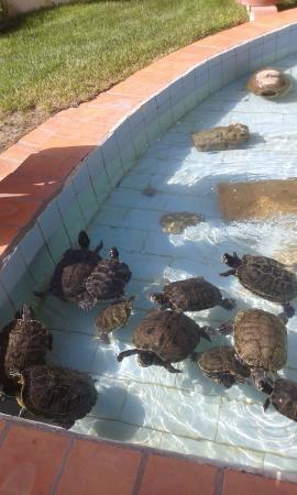 Tartarughe foto di villaggio agrituristico campanio for Piscina per tartarughe