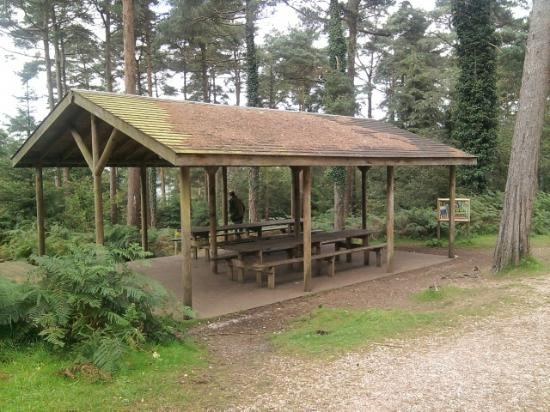 Covered Park Shelters : Covered picnic shelter picture of haldon forest park