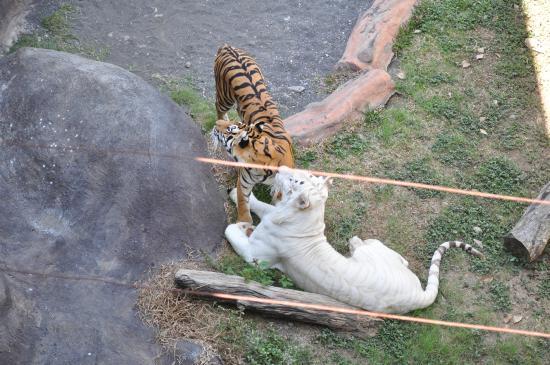 Batu Secret Zoo Jawa Timur Park 2 2020 All You Need To Know Before You Go With Photos Tripadvisor