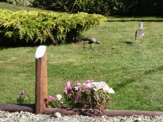 Villa San Ignacio: Teros en nuestro jardin