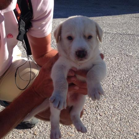 Santorini Walking Tours: Nikos rescued this adorable puppy we found at the start of the hike