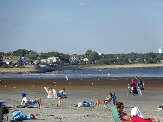 Nahant Beach Red Seaweed On Left Side Of