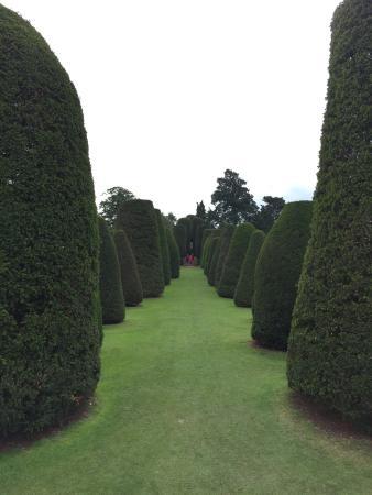 Stunning Packwood House & Gardens