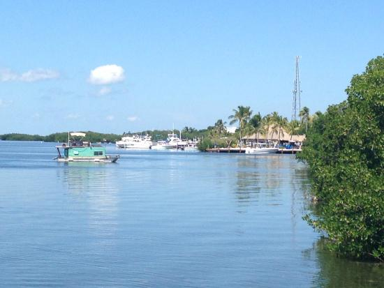 Islander Bayside Townhomes: View from hammock by the pool