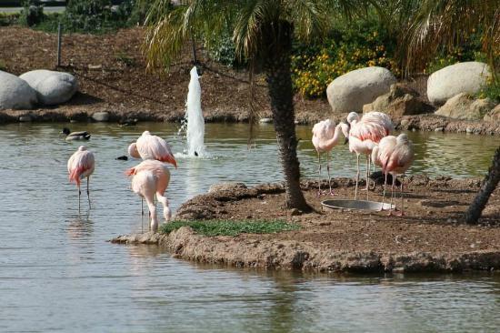 Coronado Island Marriott Resort & Spa: Lots of birds on property