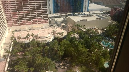 Flamingo Las Vegas Hotel & Casino: View of the flamingo habitat from the 24th floor