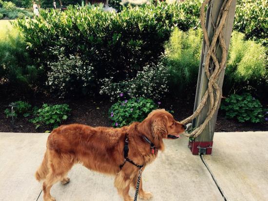 The North Carolina Arboretum: Dog friendly outdoor garden