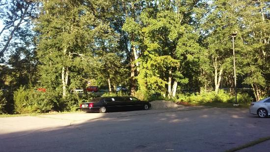 Cedar Park Inn And Suites: Lovely park like setting in the woods yet right off I95. Nice free bbq and drinks in courtyard w