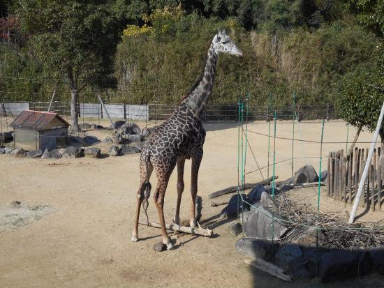 Tokushima Zoo