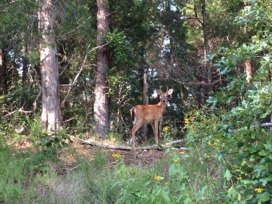 Panther Creek State Park: photo0.jpg
