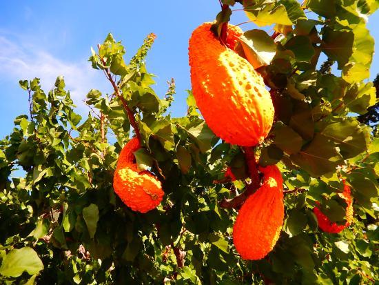 Parsons Fruit