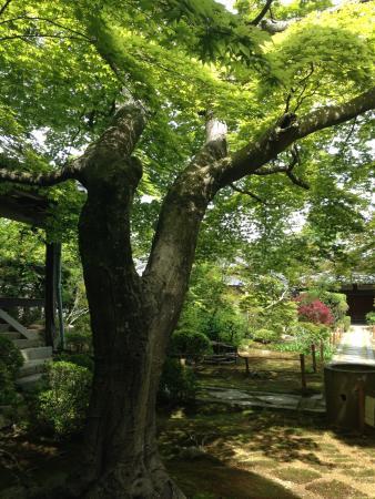 Daimonji Temple