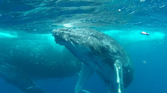 WhaleSwim Adventures : mother and calf