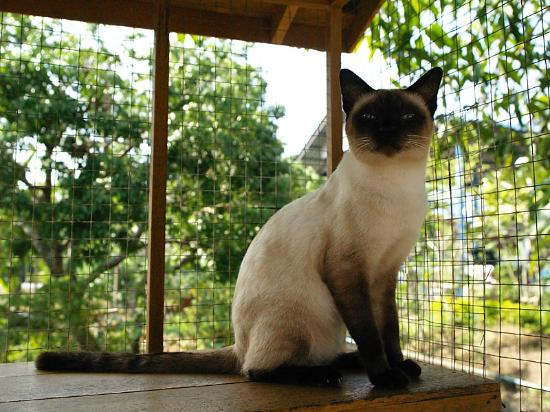 Thai Cat Center