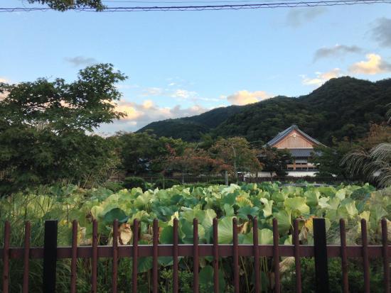 Jardin japonais photo de arashiyama kyoto tripadvisor for Hotel jardin de fleurs kyoto