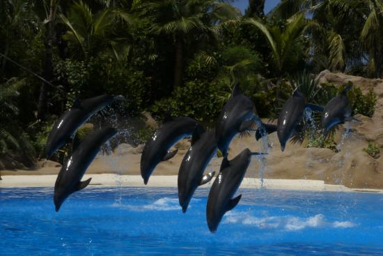 photo0.jpg - Picture of Loro Parque, Puerto de la Cruz - TripAdvisor