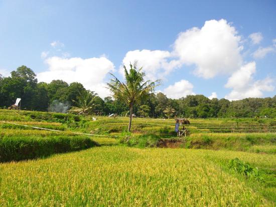 Schlafzimmer - Picture Of Rinjani Mountain Garden, Bayan - Tripadvisor
