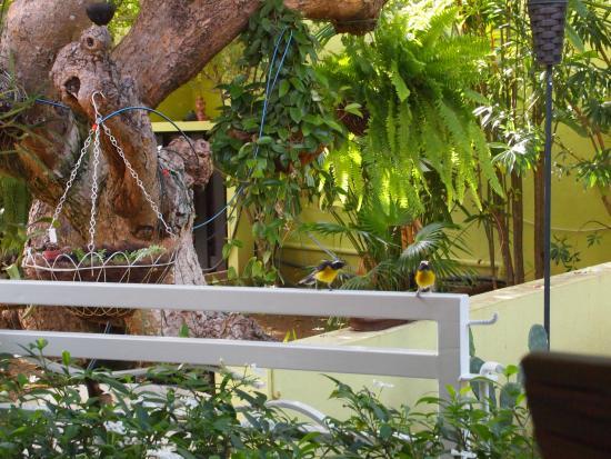 Villa L'Orangerie: De vogels in de tuin...